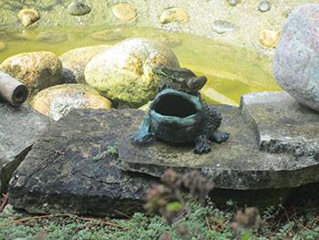 Frog on Frog