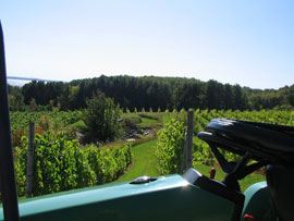 Vineyards on Michigan's Leelanau Penninsula